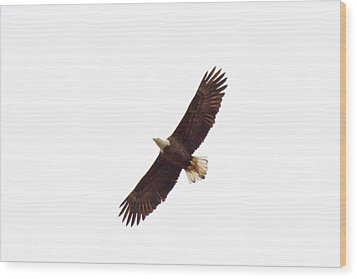 Wood Print featuring the photograph Soaring High 0885 by Michael Peychich