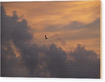 Wood Print featuring the photograph Soaring Into The Sunset by Richard Bryce and Family