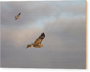 Soaring Pair Wood Print by Mike  Dawson