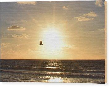 Soaring Seagull Sunset Over Imperial Beach Wood Print by Karen J Shine