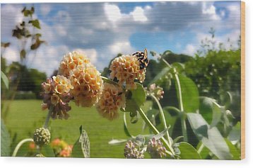 Wood Print featuring the photograph Sobaso by Isabella F Abbie Shores FRSA