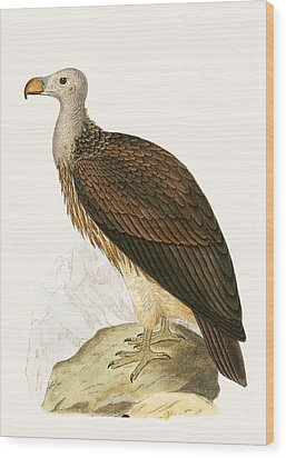 Sociable Vulture Wood Print by English School