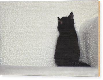 Wood Print featuring the photograph Sitting Kitty by Amy Tyler