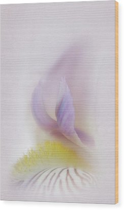 Wood Print featuring the photograph Soft And Delicate Iris by David and Carol Kelly