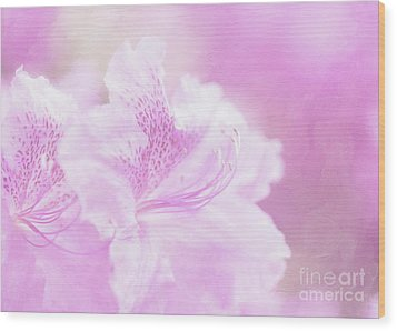 Soft And Lovely Pink Rhododendrons  Wood Print