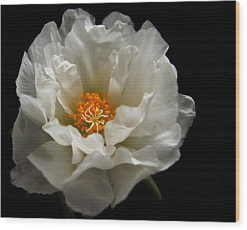 Wood Print featuring the photograph Soft And Pure by Judy Vincent