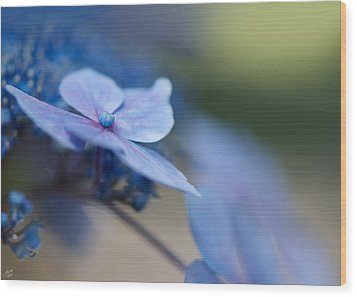 Wood Print featuring the photograph Soft Blue Moment by Lisa Knechtel