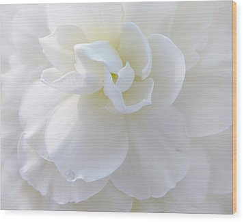 Soft Ivory Begonia Flower Wood Print by Jennie Marie Schell
