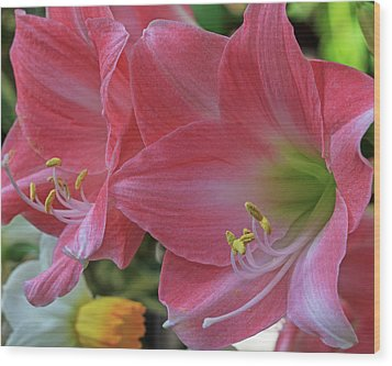 Wood Print featuring the photograph Soft Lilies by Robert Pilkington