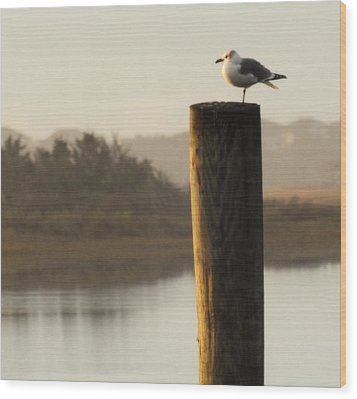 Soft Mornings Wood Print by Karen Wiles