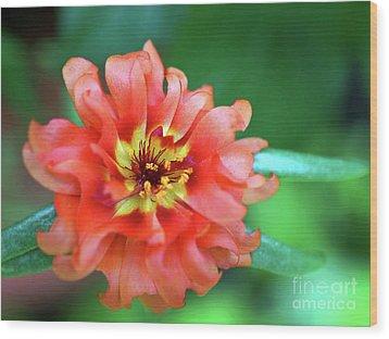 Soft Peach Ruffled Petals Wood Print by Sue Melvin