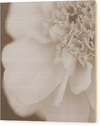 Soft Petals Wood Print by Christine Ricker Brandt