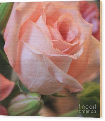 Soft Pink Rose Wood Print by Carol Groenen
