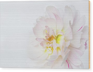 Wood Print featuring the photograph Soft Ruffles by Mary Jo Allen
