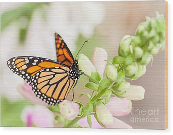 Soft Spring Butterfly Wood Print