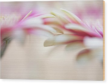 Wood Print featuring the photograph Soft Touch. Macro Gerbera by Jenny Rainbow