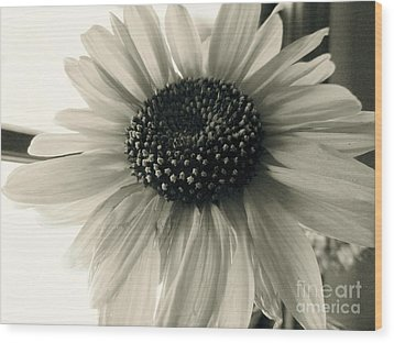 Soft White Light Wood Print by Trish Hale