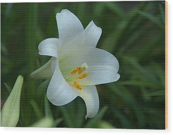 Wood Print featuring the photograph Soft White by Monte Stevens