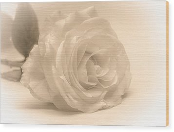 Wood Print featuring the photograph Soft White Rose by Scott Carruthers