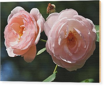 Wood Print featuring the photograph Softly Pink by Al Fritz