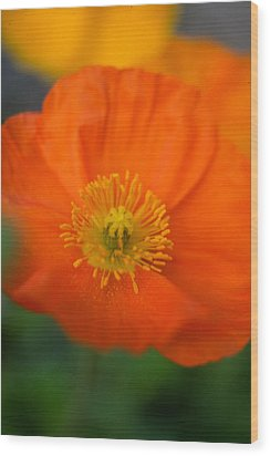 Softly Poppies Wood Print by Kathy Yates