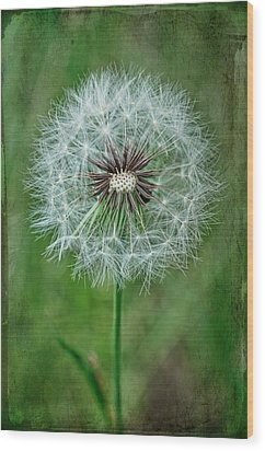 Wood Print featuring the photograph Softly Sitting by Jan Amiss Photography