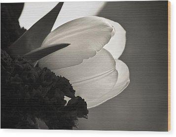 Lit Tulip Wood Print by Marilyn Hunt