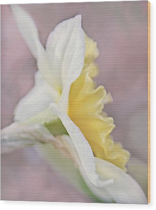 Wood Print featuring the photograph Softness Of A Daffodil Flower by Jennie Marie Schell