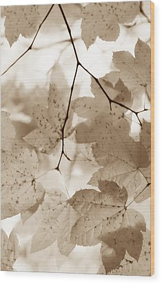 Softness Of Brown Maple Leaves Wood Print by Jennie Marie Schell