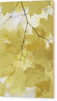 Softness Of Yellow Leaves Wood Print by Jennie Marie Schell