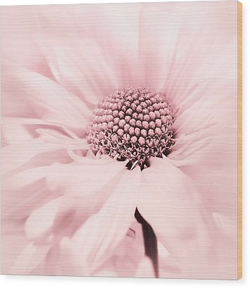 Wood Print featuring the photograph Soiree In Cotton Candy Pink by Darlene Kwiatkowski