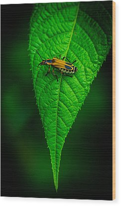 Soldier Beetle Wood Print by Bruce Pritchett