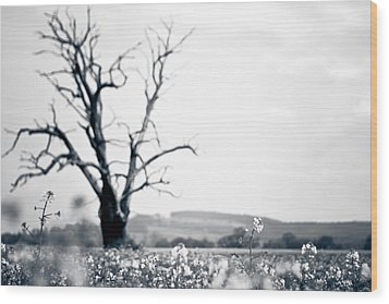 Wood Print featuring the photograph Solemn Oak by Justin Albrecht
