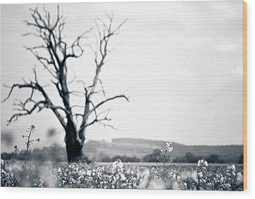 Solemn Oak Wood Print