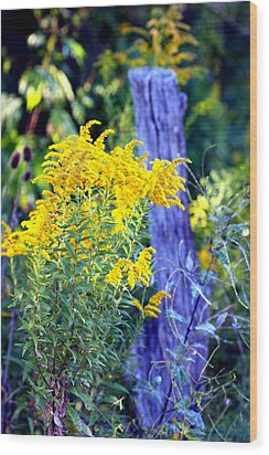 Solidago Wood Print
