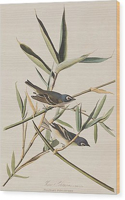 Solitary Flycatcher Or Vireo Wood Print