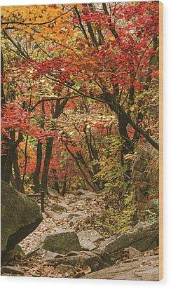 Solitary Wood Print by Hyuntae Kim