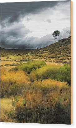 Wood Print featuring the photograph Solitary Pine by Frank Wilson