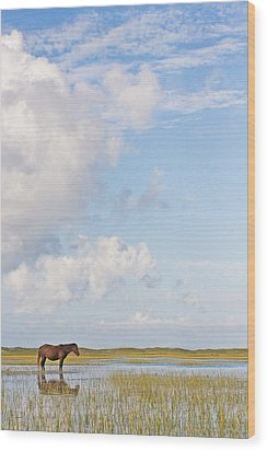 Wood Print featuring the photograph Solitary Wild Horse by Bob Decker
