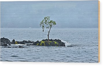 Solitude In Hilo Bay Wood Print by Christopher Holmes