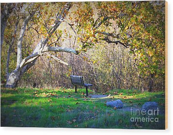 Solitude Under The Sycamore Wood Print by Carol Groenen