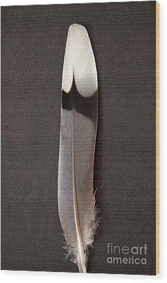 Solo Wood Print by Julia Hiebaum