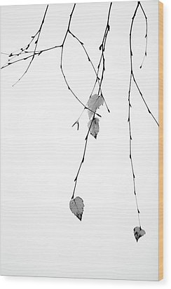 Wood Print featuring the photograph Solo by Rebecca Cozart
