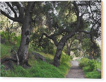 Solstice Canyon Live Oak Trail Wood Print by Kyle Hanson
