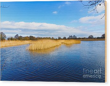 Somerset Levels Wood Print by Colin Rayner