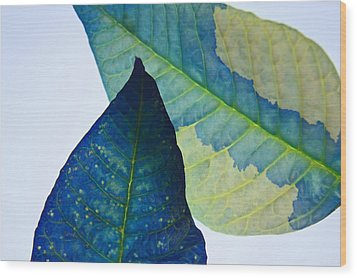 Something Blue Wood Print by Bobby Villapando