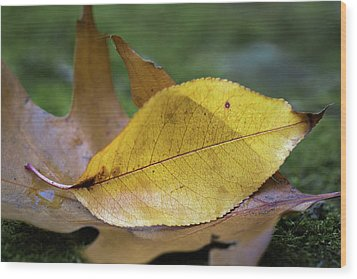 Wood Print featuring the photograph Something Fishy by Dale Kincaid