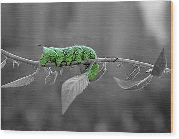 Something Green Wood Print