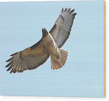 Somewhere In The Sky A Red Tailed Hawk Soars Wood Print by Wingsdomain Art and Photography