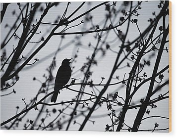 Wood Print featuring the photograph Song Bird Silhouette by Terry DeLuco